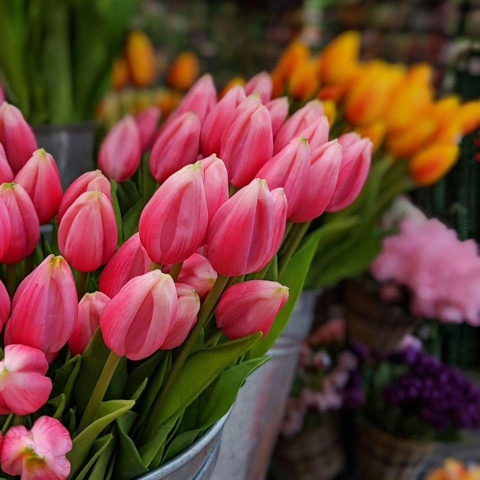 tulipes roses - Singel 522D, 1017 AZ Amsterdam, Pays-Bas, Amsterdam (2×2)