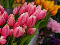 tulipas rosa - Singel 522D, 1017 AZ Amsterdam, Holanda, Amsterdam