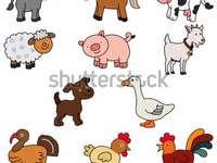 Ce tipuri de animale sunt?