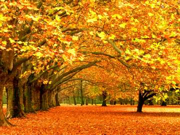 autumn rust