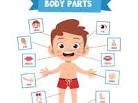 Menselijk lichaam - rangschik de puzzel zodat het een menselijk lichaam is en noem de delen van het lichaam