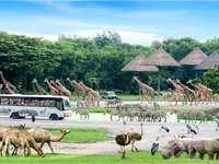 safari mundial en tailandia - m .......................