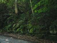 зелени дървета и растения на земята - По същия маршрут по Селисберг беше блажено. Селисберг,
