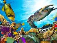 Quebra-cabeça de animais marinhos