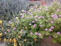 Virágok. - Kis virágok ......