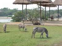 safari world bangkok - m ...................