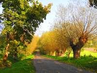 Willow avenue v Murzynowo - Willow avenue v Murzynowo