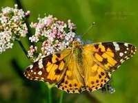 Motýľ tegen prírode