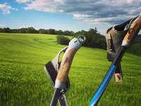 μαύρο και μπλε γκολφ κλαμπ στο πράσινο γρασίδι πεδίο - μαύρο και μπλε γκολφ κλαμπ στο πράσινο γρασίδι πεδίο κ�