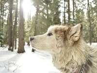 Chien gratuit - chien, soleil, neige, arbres