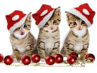 Three kittens - Three Christmas kittens with hats