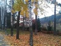 Herbstkupfer im Park