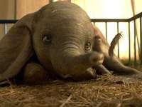 A Dumbo remake Tim Burton korabeli legjobb filmje - Mint a nagyfülű bébi elefánt elleni esélyek, úgy tűnik, hogy a pakli Tim Burton Dumbo-jával