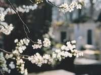 makro snímek fotografie bílé květy - Père-Lachaise, Paříž, Francie