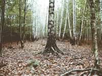 foto de troncos de árvore