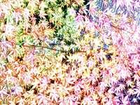 Kolorowy krzew