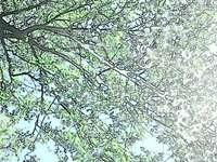 Under trädet - Trädet ses underifrån.