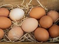 hnědé vejce na hnědé hnízdo