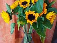 Слънчоглед - Слънчоглед за рожден ден