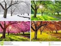 träd under årstiderna - är en plats i Japan mellan de fyra årstiderna