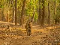 tigre marrom em solo marrom durante o dia