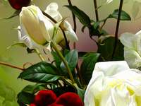 white and red roses - m .......................