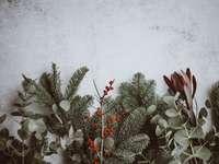 foto av gröna blad växter - Julbakgrund - tall, eukalyptus, bär.