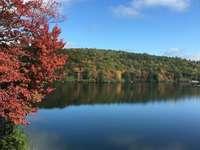 κόκκινα και πράσινα δέντρα δίπλα στη λίμνη κάτω από το γαλάζιο του ουρανού - κόκκινα και πράσινα δέντρα δίπλα στη λίμνη κάτω από το