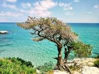 stařec a moře Sardinie Itálie - krásná krajina Sardinie v Itálii