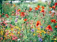 Wild flowers - This image shows wildflowers.