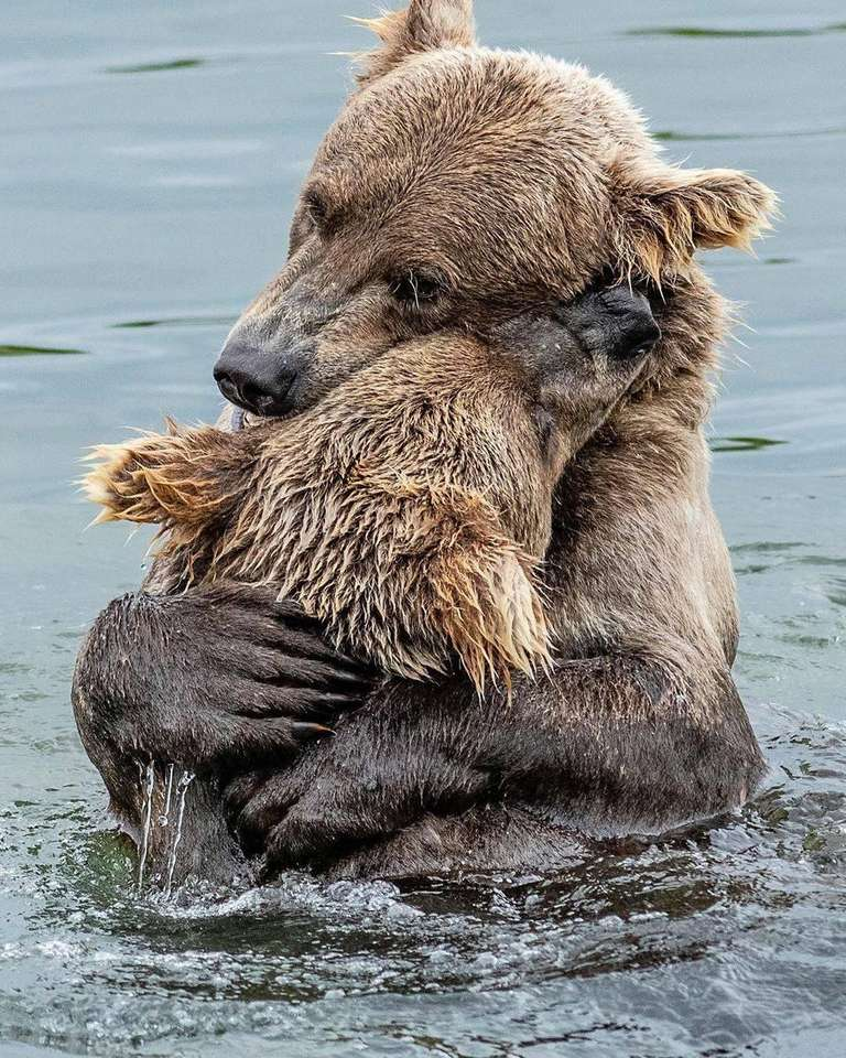 De två björnarna - Kärlek mellan en mås och ett barn (9×12)