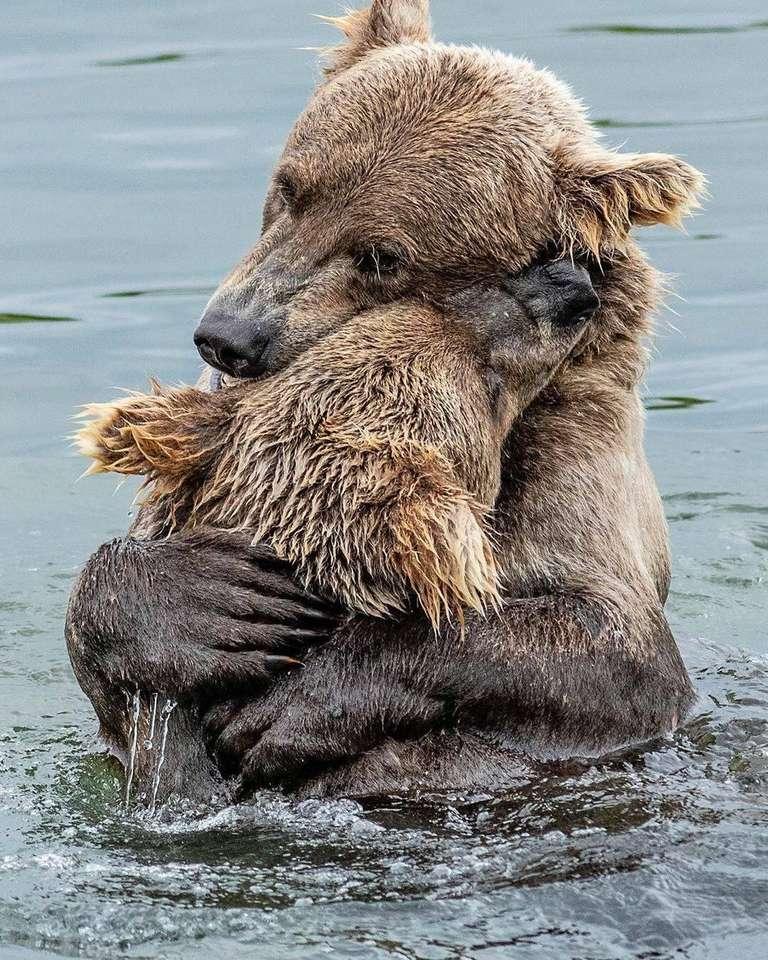 Двете мечки - Любов между чайка и дете (9×12)