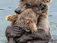 Dva medvědi - Láska mezi rackem a dítětem!