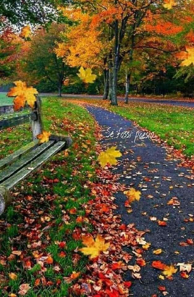 höstspår - Gå på hösten på spåret (7×12)