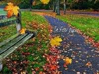 sentiero autunnale - Cammina in autunno sul sentiero