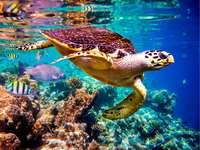 mořská želva - m ......................