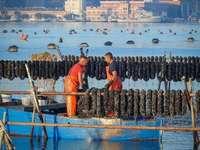 Chovatelé slávek Taranto Itálie - Chov mitili (slávky) typické pro Taranto v Itálii
