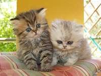 gatinhos no travesseiro