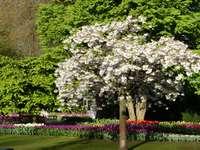 Primavera - Jardim Keukenhof na Holanda