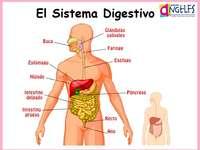 Το πεπτικό σύστημα - Λύστε αυτό το παζλ για το πεπτικό σύστημα.