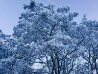 bílý třešňový květ strom pod modrou oblohou během dne - Радна вулиця, Zavorichi, Ukrajina