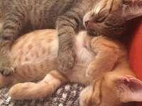sleeping cats - m ........................