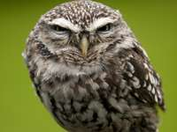 owl on a branch - m ........................