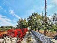 országút Martina Franca Puglia - az apuli vidék nagyon szép