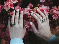 houder van roze bloemen - handen in de lente. Batumi, Georgië