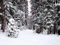 дървета, покрити със сняг