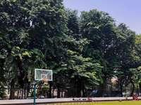 zelené stromy na šedé betonové silnici během dne - Basketbalové hřiště v městském parku. Jakarta, Indonésie