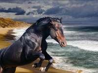 cal pe plajă - m ......................