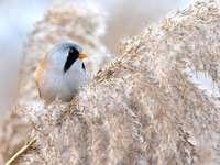 pássaro colorido em um galho - m ......................