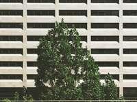 albero verde accanto a un edificio in cemento - Municipio di Toronto, Toronto, Canada